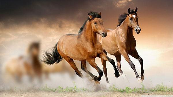 Bài Thơ Đường Dài Mới Biết Ngựa Hay Đầy Hấp Dẫn