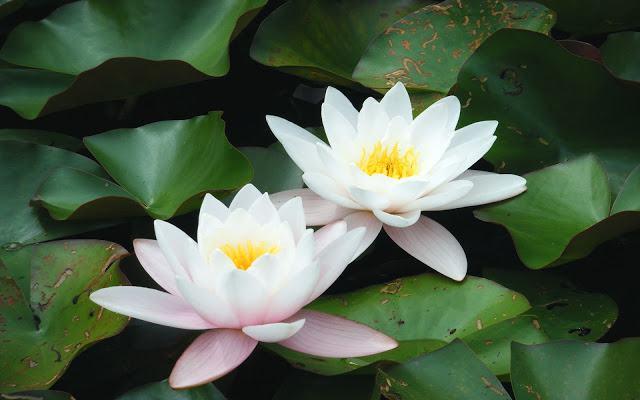 Thơ về cuộc sống-chùm thơ ý nghĩa giúp ta ngẫm ra nhiều điều